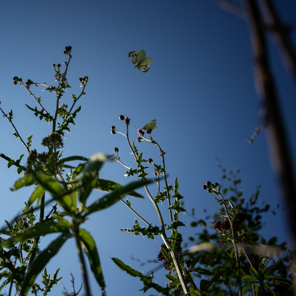 Pflanzen- und Insektenwelt