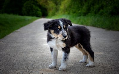 Hunde-Nachwuchs im Dorf